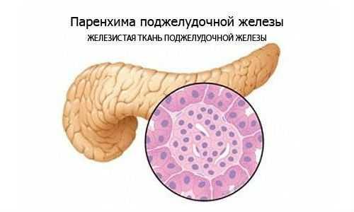 Паренхима поджелудочной железы