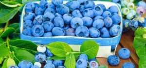 Голубика при диабете