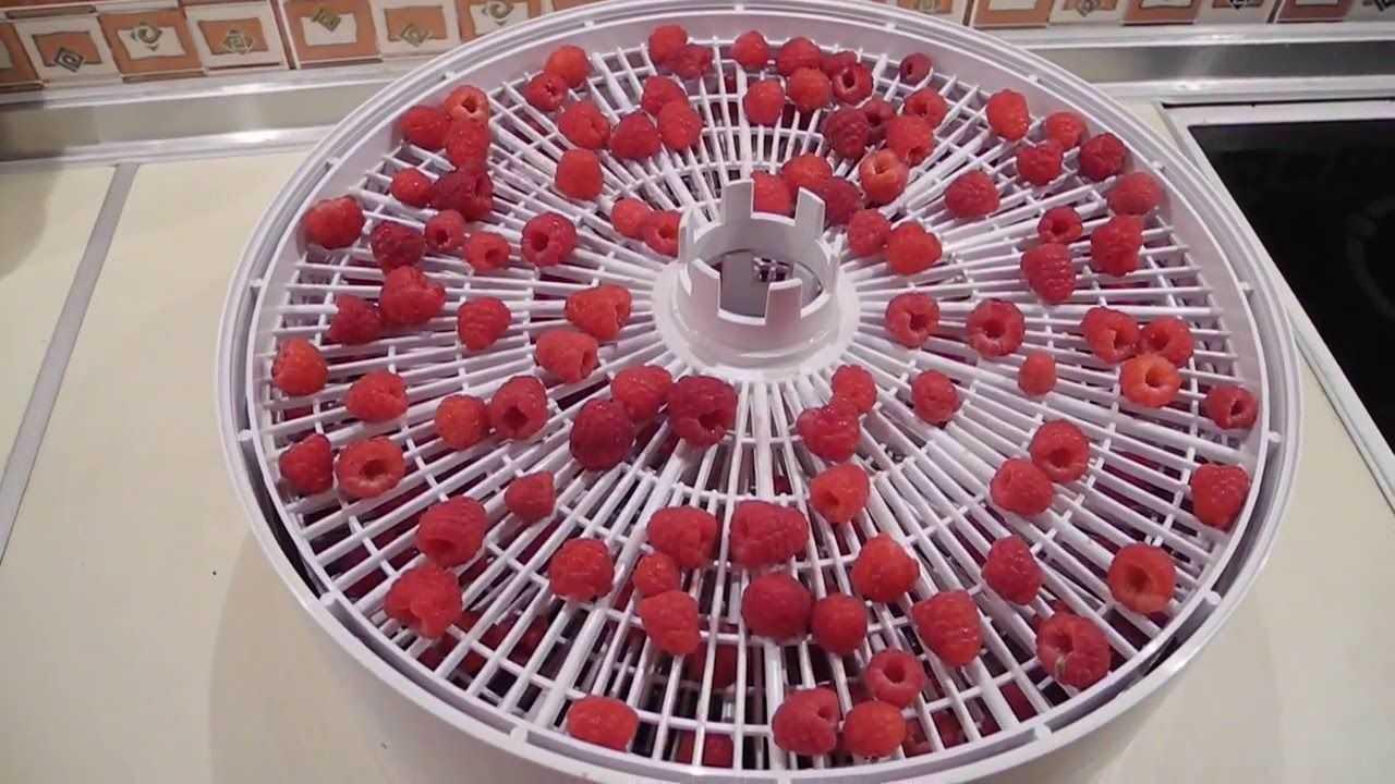 сушка ягод малины