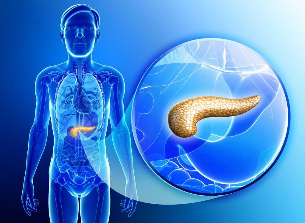 Для чего в организме инсулин