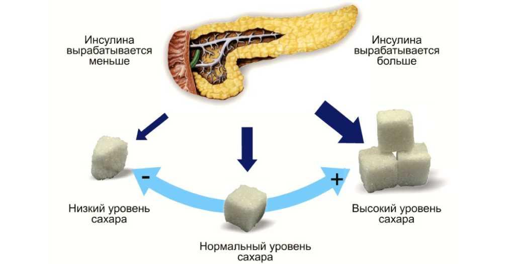 синтез инсулина